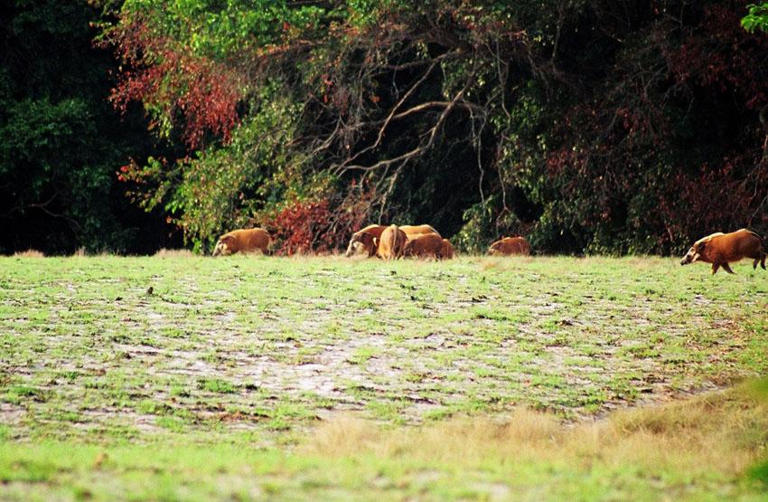 myislands pl » Blog Archive » Loango